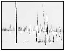 <i>69th Parallel 1</i> 2005 Gelatin silver print mounted on aluminum in artist's frame 37 x 47 inches;  93.5 x 119.5 cm