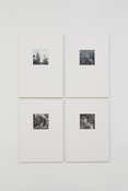 Martin Honert  <I>Lord of the Flies</i> 1995 Polystyrene and photographs, four sheets  Each: 11 7/8 x 8 1/4 inches; 30 x 21 cm