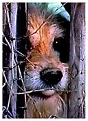 <i>Hunde (Dogs)</i> 2003 DVD 30 minutes