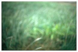 Grass, Chantilly 2002 C-print 20 x 30 inches; 51 x 76 cm
