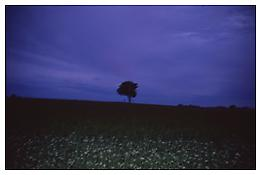 Nan Goldin <i>The lonely tree, Sweden</i> 2008 Cibachrome 30 x 40 inches; 76 x 102 cm