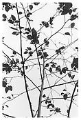 <i>Untitled (Questions for an Overcast Day)</i> 2006 Gelatin-silver print Image: 9 x 6 inches; 23 x 15 cm Sheet: 14 x 11 inches; 36 x 28 cm