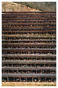 <i>Fukuyama</i> 2004 C-print mounted on Plexiglas in artist's frame 120 1/4 x 81 1/2 inches; 305 x 207 cm