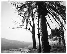<i>Redlands, Looking Toward Los Angeles, California</i> 1983 Gelatin-silver print 16 x 20 inches; 40.5 x 51 cm