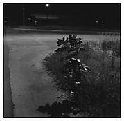 <i>Longmont, Colorado</i> 1980 Gelatin-silver print Image: 11 x 11 inches; 28 x 28 cm Sheet: 20 x 16 inches; 51 x 41 cm