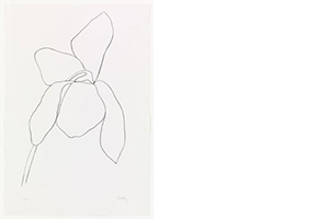John R. Stomberg to deliver lecture on <I>Matisse Drawings: Curated by Ellsworth Kelly</i>