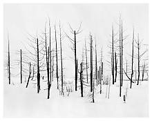 <i>69th Parallel 2</i> 2005 Gelatin silver print mounted on aluminum in artist's frame 37 x 47 inches; 94 x 120 cm