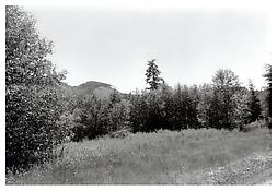 <i>Clatsop County, Oregon</i> 1999-2002 Gelatin-silver print 11 x 14 inches; 28 x 36 cm