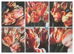 <i>Tulips (III)</i> 1993 Fresson color photograph Image: 11 7/8 x 11 inches; 30 x 28 cm