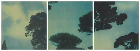 <i>Trees</i> 1993 Portfolio of three Fresson color photographs Image: 15 3/4 x 14 3/4 inches