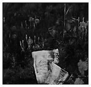 <i>South Denver, Colorado</i> c. 1980 Gelatin-silver print Image: 6 3/4 x 7 inches; 17 x 18 cm Sheet: 14 x 11 inches; 36 x 28 cm