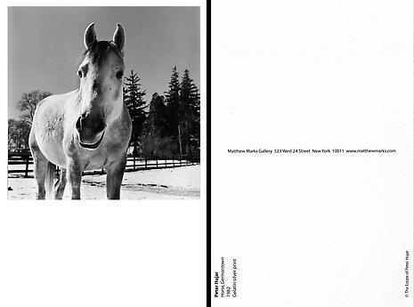Horse, Germantown 1982 Gelatin silver print