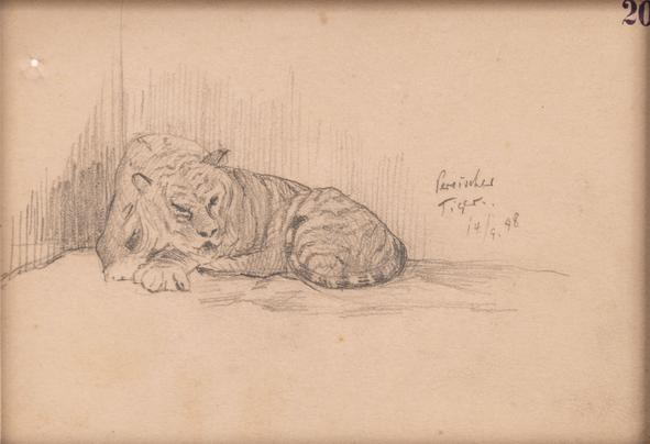 Hermann Struck  Tiger, 1898 Graphite on paper 6.26 by 4.25 inches (15.9 by 10.8 cm) Framed: 10 1/2 x 8 1/2 inches (Inv# HS3039)