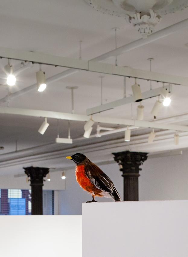 David Adamo<br /><br />Untitled (robin)<br />2014<br />papier-mâché, feathers, and plastic<br />5 1/8 x 7 7/8 x 2 9/16 inches<br />(13  x 20 x 6.5 cm)<br />PF3437<br />