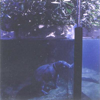 Lucinda Devlin<br />Miniature Hippopotamus, Zoo Berlin<br />1999<br />c-print<br />16 x 16 inches (40.5 x 40.5 cm)<br />edition of 40<br />PF1951<br />minimum donation: EUR 1,500.<br />