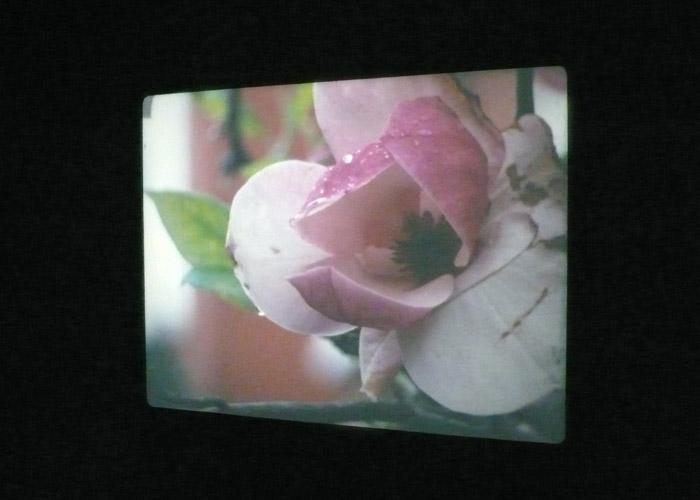 <u>Our Magnolia</u><br />2009<br />16-mm film with sound <br />Installation view<br />