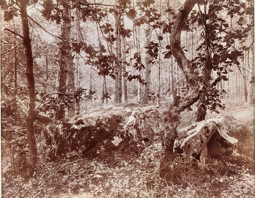EUGÈNE ATGET<br />Fontainebleau <br />1925<br />early albumen silver print<br />6-3/4 x 8-1/2 inches (17.14 x 21.59 cm)<br />