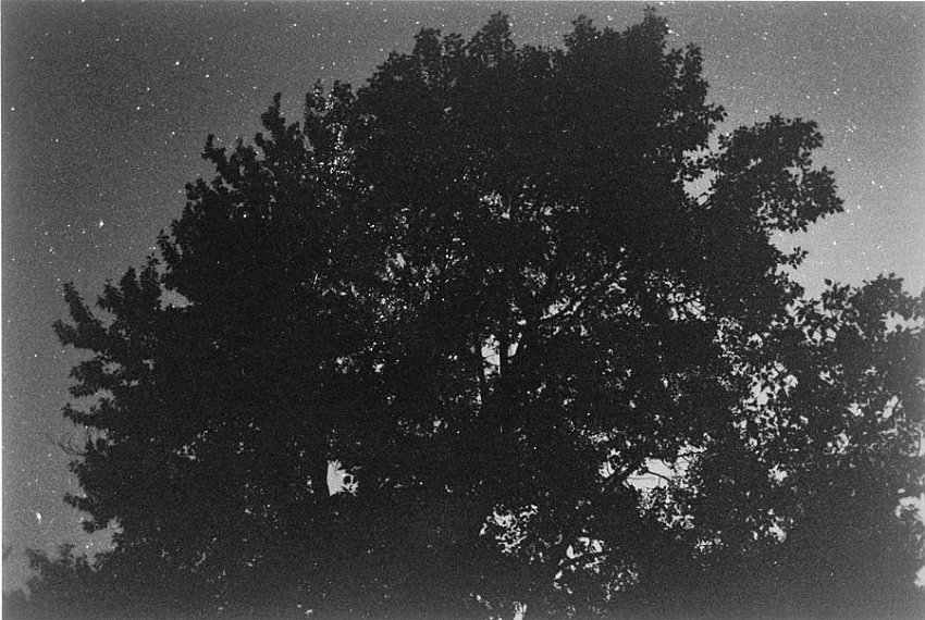 ROBERT ADAMS<br />Pine Valley, Oregon<br />2003 / printed 2004<br />gelatin-silver print<br />5-7/8 x 8-3/4 inches (14.92 x 22.22 cm)<br />