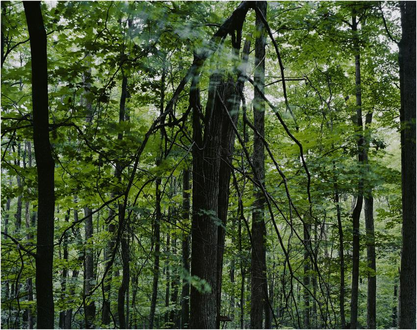 "JOSEPH BARTSCHERER<br /><i>untitled</i>, from the series <i>Forest</i><br />2004<br />C-print<br />framed: 28 3/4"" x 36 1/4 inches (73 x 92 cm)<br />Edition 2/10, with + 2 AP<br />"
