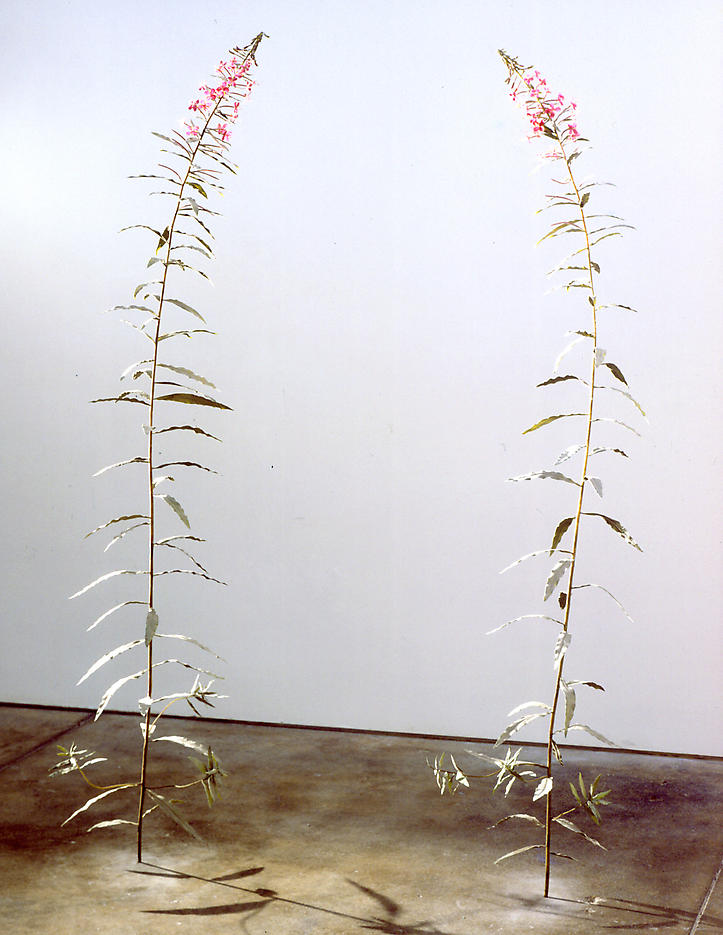 Fireweed 2002-2003 various materials, edition of 3 each: 72 x 15 inches/182.9 x 38.1 cm
