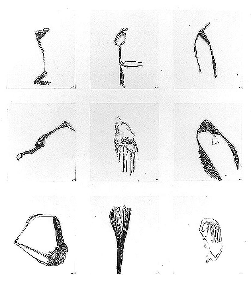 Group #56 1999 set of 9 drawings, graphite on paper 32 x 28 inches/81.3 x 71.1 cm