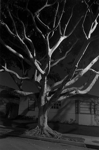 Henry Wessel <i>Night Walk No. 55</i> 1998 Gelatin silver print 17 7/8 x 12 1/8 inches
