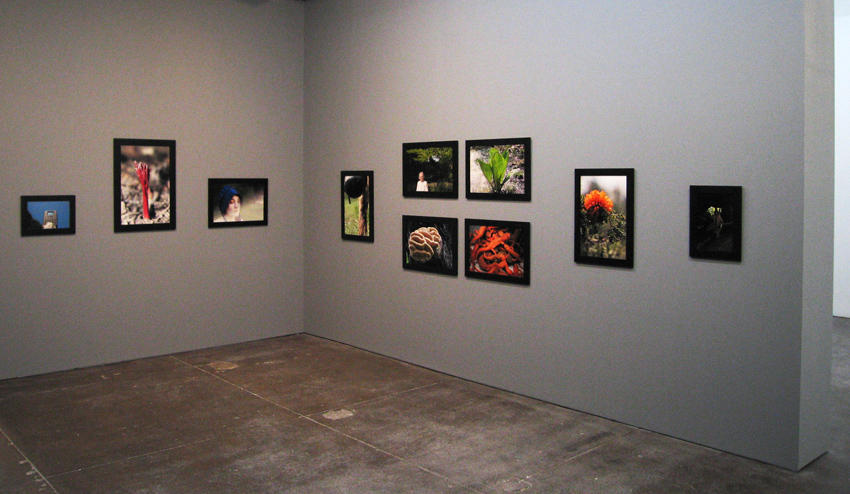 Experiments in Primitive Living THAW installation view 2008