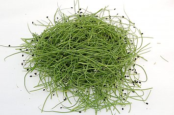 Micro Onion/ Rock Chives