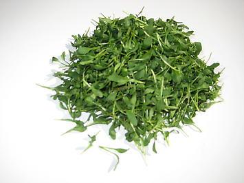 Micro Peppercress