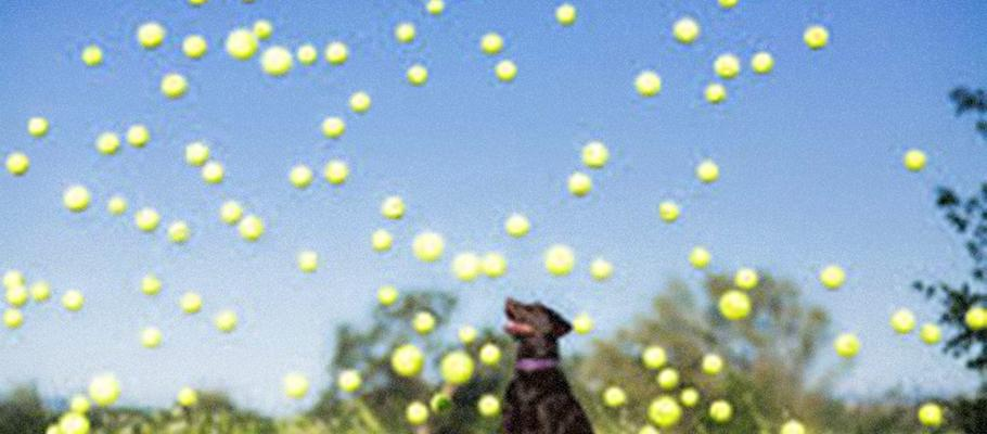 DOGS CHASE BALLS