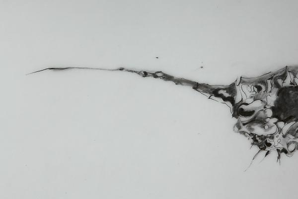 Seedling, 2012 Detail Graphite on mylar 11 x 14 inches Image