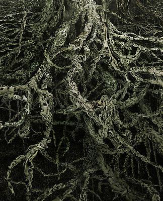 Xylem, 2011 Detail Image