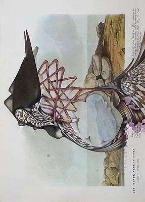Audubon Drawing Series 328, 2010 mixed media on paper 12 1/4 x 9 inches Image