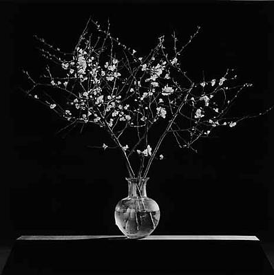 Flowers, 1986 gelatin silver print image: 19 1/4 x 19 1/4 inches (48.9 x 48.9 cm) paper: 24 x 20 inches (61 x 50.8 cm) edition of 10 with 2 APs  MAP-1636 Selected by Kentucky participant