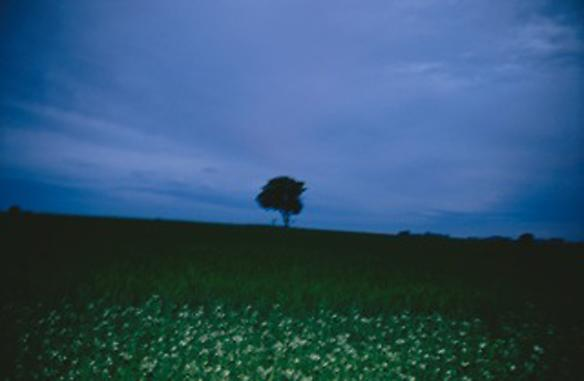 the lonely tree, sweden 2008 100 x 150 cm edition of 3