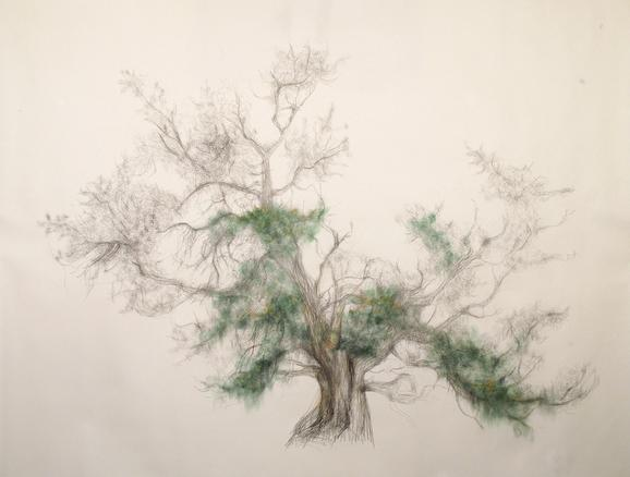 Green tree 2014 graphite and pastel on Kochi Mashi 190 x 236 cm