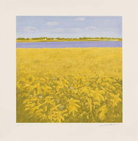 Goldenrod 2012 color lithograph on Revere soft white paper 26 1/2 x 26 inches Edition of 54