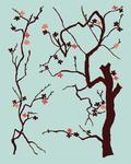 Cherry Blossom  Potomac